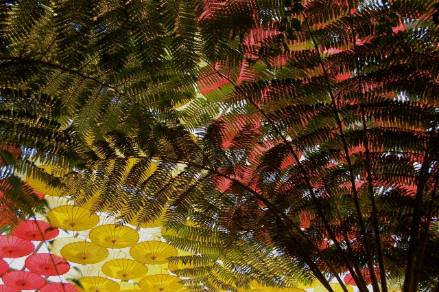 Ferns and Parasols, 2011