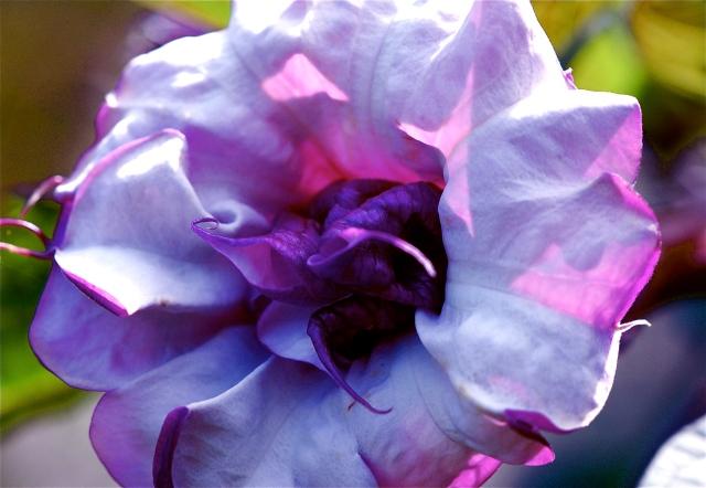 Flower Head, 2011