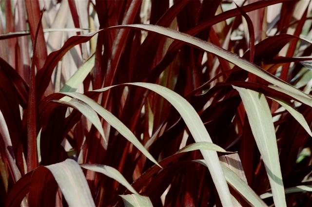 Grasses 2011