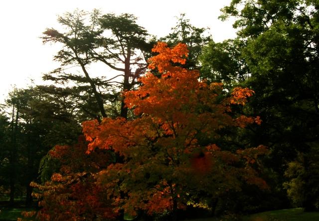 Tree, 2011