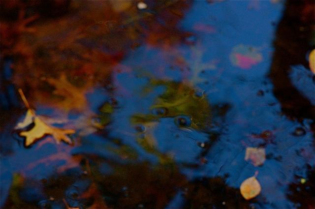 Autumnal Pond I, November 2011;