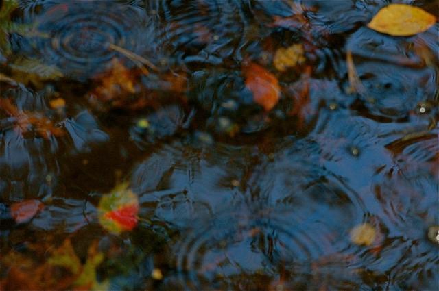 Autumnal Pond II, November 2011;