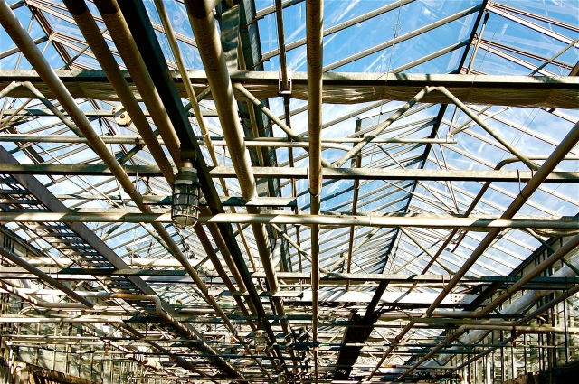Greenhouse # One, 2011