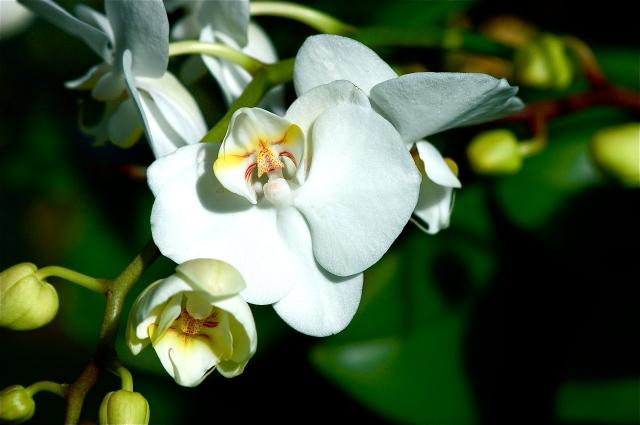 Orchid Column III