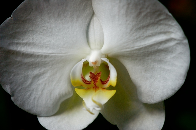 Orchids, Permanent Collection 5