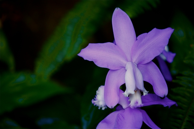 Orchids, Permanent Collection 6