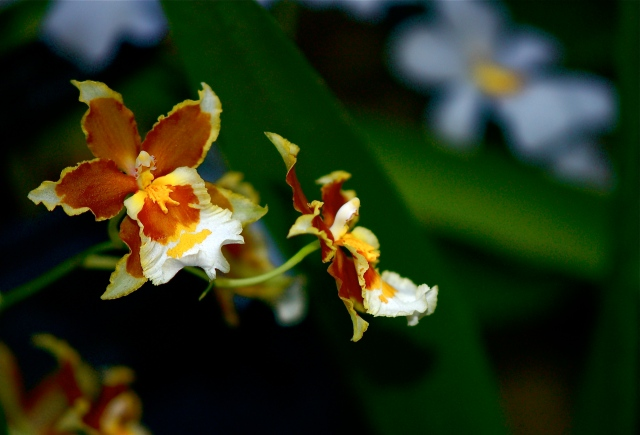 Orchids, Permanent Collection 3