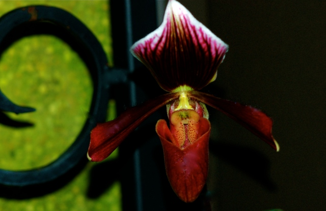 Orchids, Permanent Collection 4