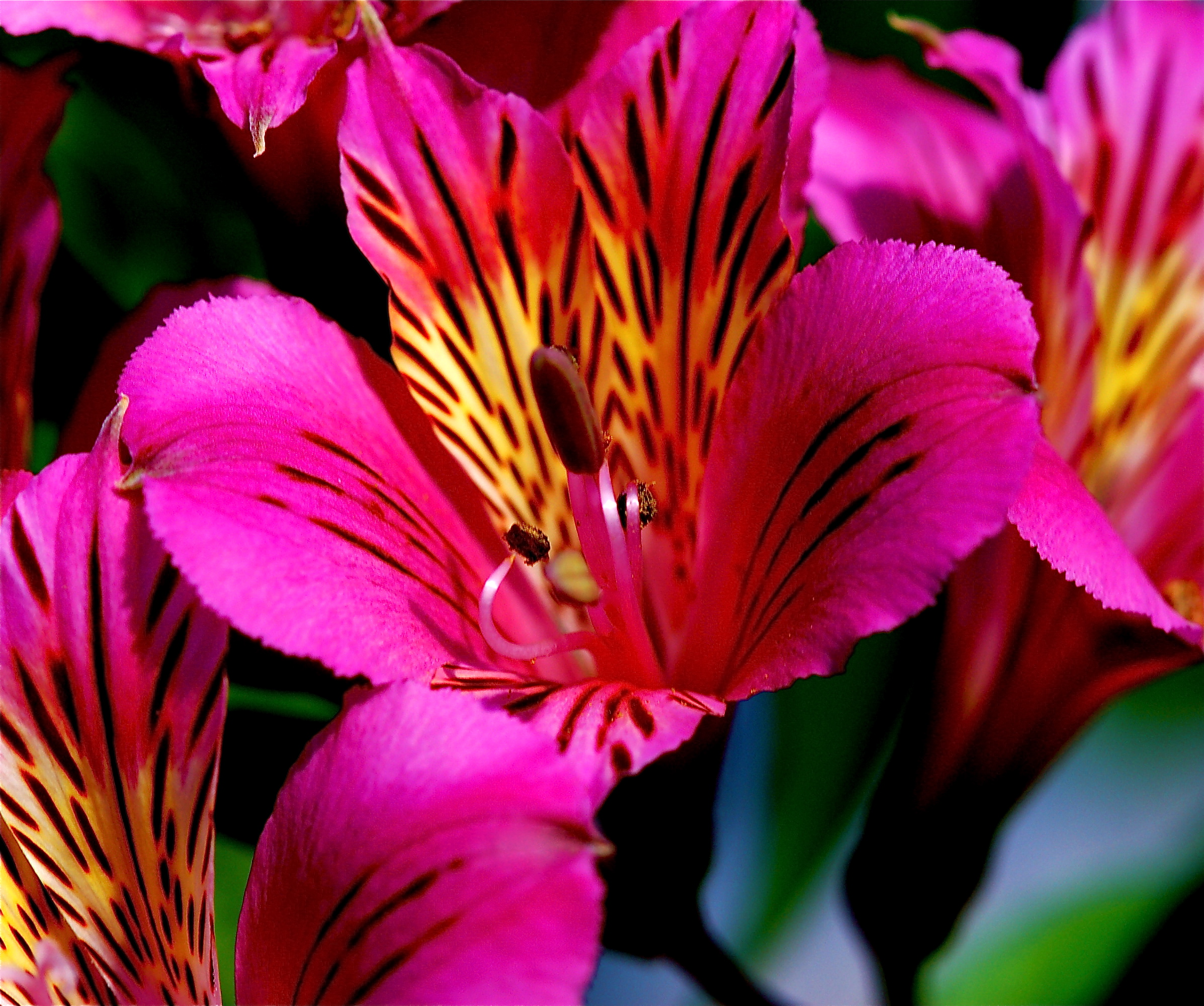 exotic flowers pictures and names  flowers gallery, Beautiful flower