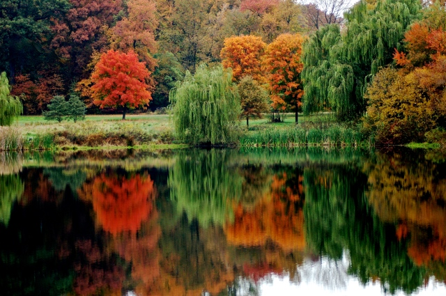 1. Autumn Reflections, NIkon DSLR, October 2012;