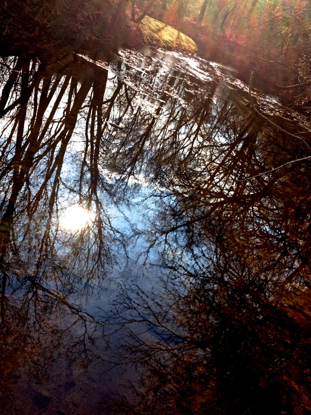 2. Reflections, iPhone 4s, November 2012;
