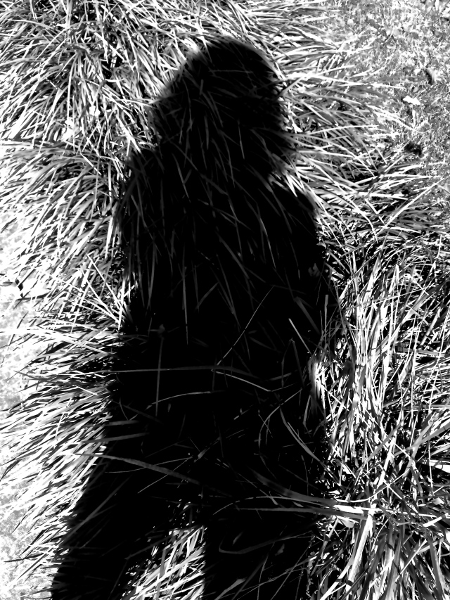 2. Grasses and Shadow, iPhone 4s, September 2012;