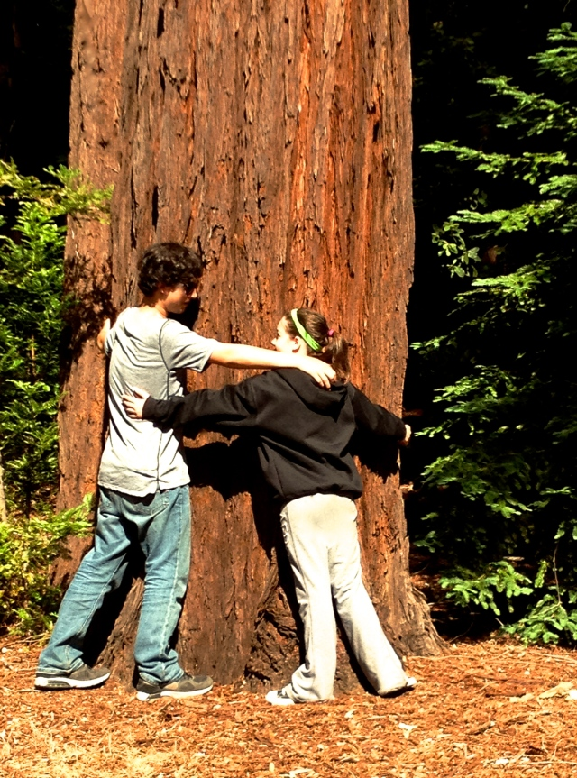4. Hugging the Redwood, iPhone 4s, Mount Herman, June 2012;