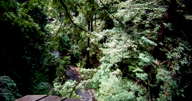 10. Redwood Canopy View from Platform, Ziplining, June 2012; © Sally W. Donatello and Lens and Pens by Sally, 2012
