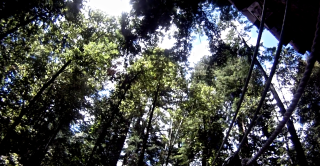 6. The Redwood Canopy, video still, Mount Hermon, June 2012;