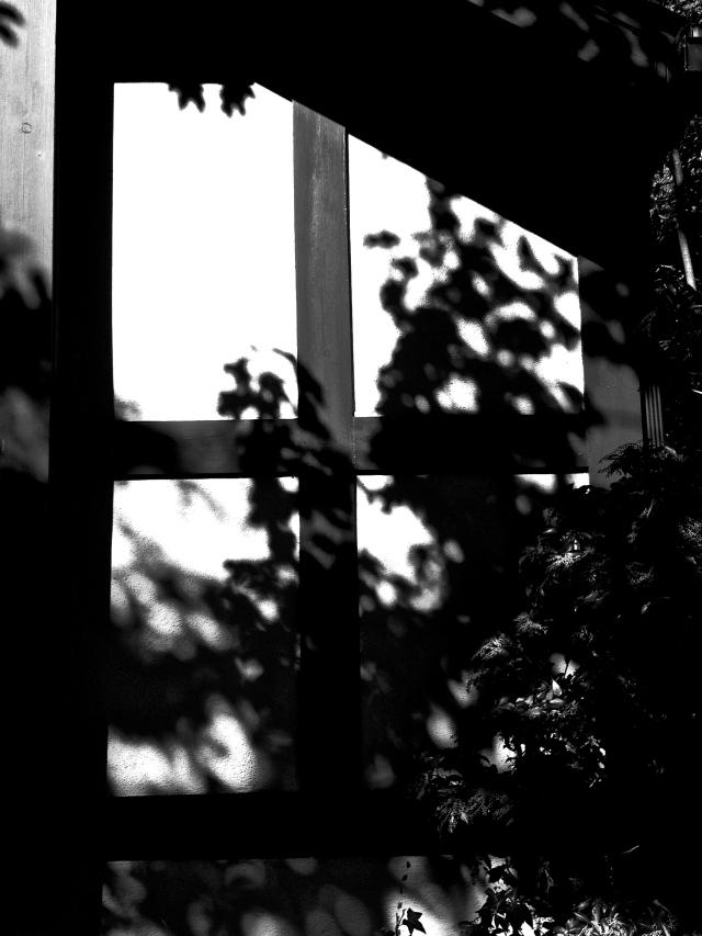 5. Shadows on Window, iPhone 4s, October 2012;
