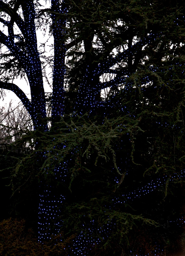 10.Outdoor Lights, Nikon DSLR, December 2012; © Sally W. Donatello and Lens and Pens by Sally, 2012