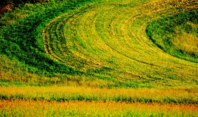 11. Autumn Fields, Nikon DSLR, September 2012; © Sally W. Donatello and Lens and Pens by Sally, 2012