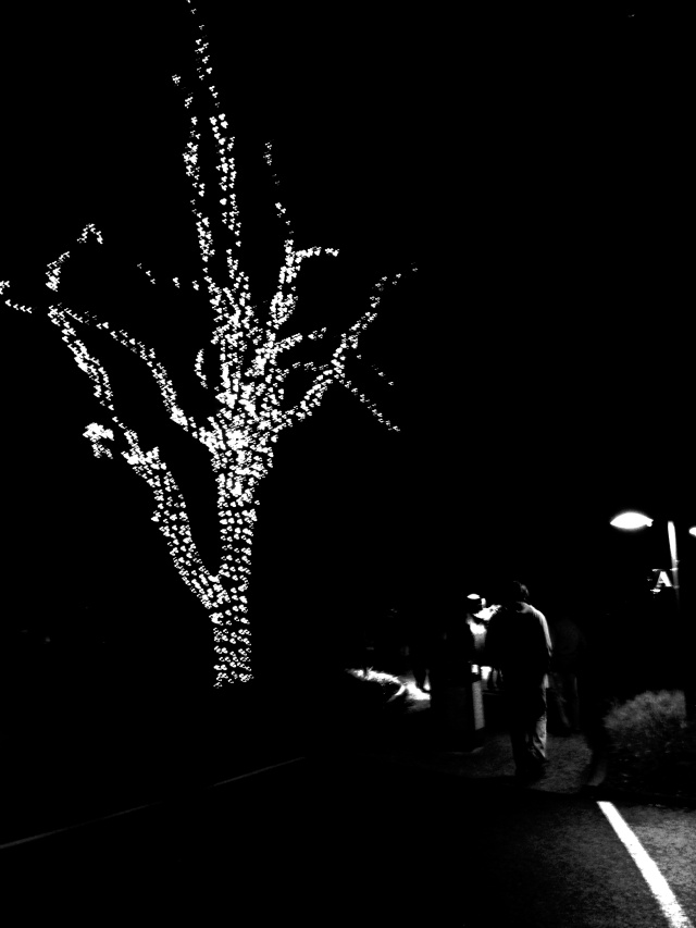 12. Outdoor Lights, Nikon DSLR, December 2012; © Sally W. Donatello and Lens and Pens by Sally, 2012
