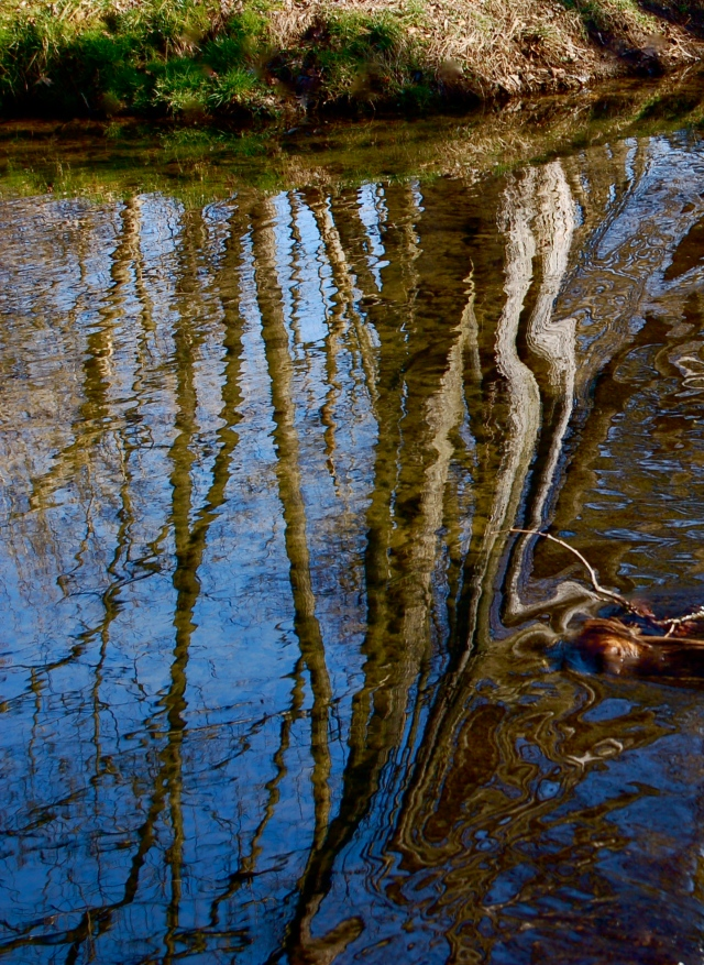 4. Morning Reflections, Nikon DSLR, March 2012; © Sally W. Donatello and Lens and Pens by Sally, 2012