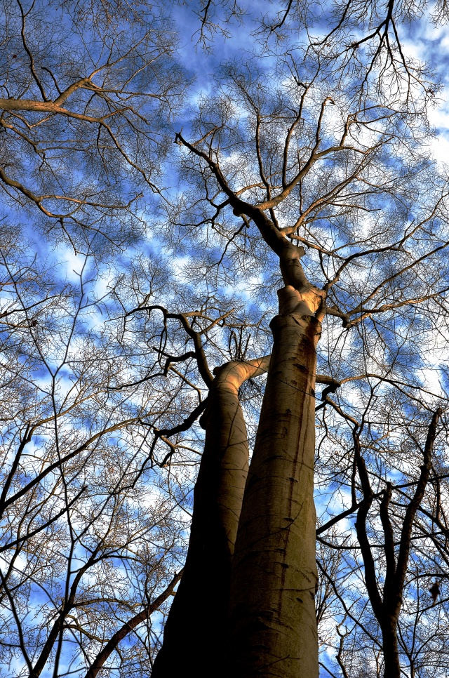 1. Sky and Trees, Nikon DSLR, January 2013; © Sally W. Donatello and Lens and Pens by Sally, 2013