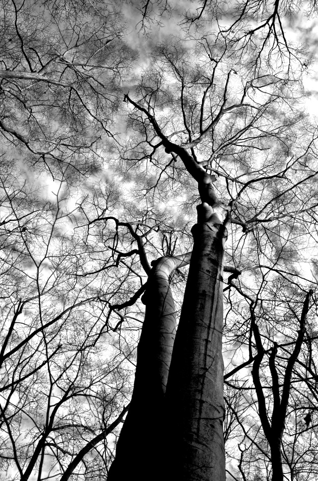 2. Black-and-White Sky and Trees, Nikon DSLR, January 2013; © Sally W. Donatello and Lens and Pens by Sally, 2013