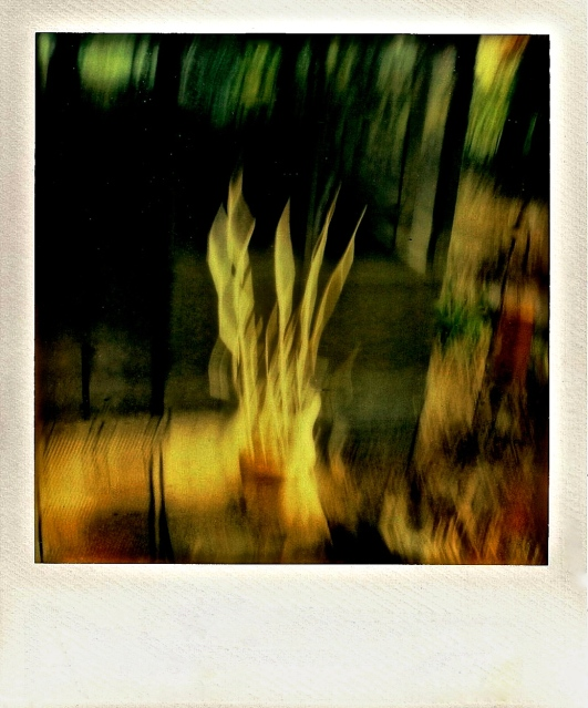 3. Abstraction, Polaroid SX-70,October 2012; © Sally W. Donatello and Lens and Pens by Sally, 2013