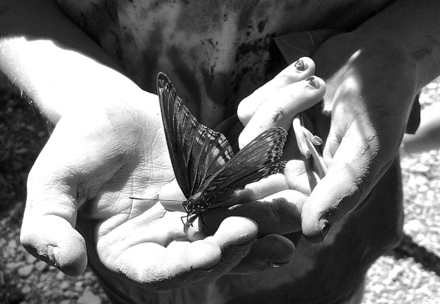 6. Butterfly, iPhone 4, August 2012; © Cole Bedford, 2013