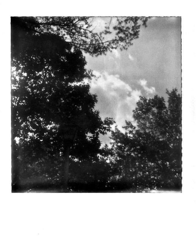 7. Clouds and Trees, Polaroid, October 2012; © Cole Bedford, 2013