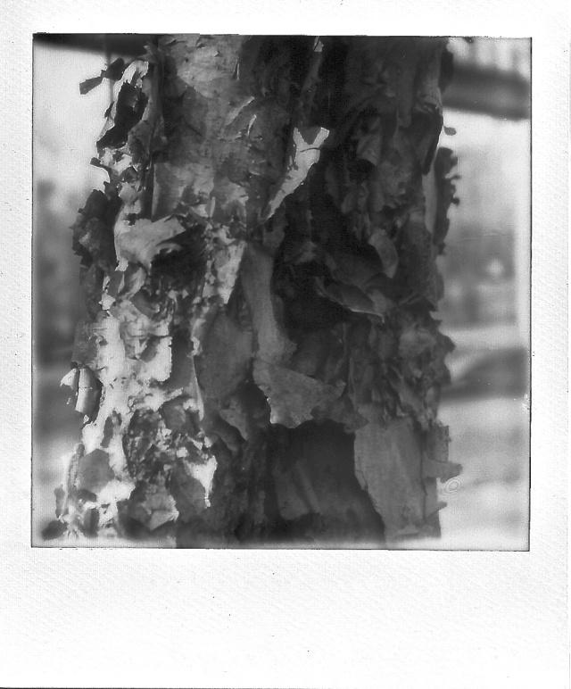 8. Bark, Polaroid, November 2012; © Cole Bedford, 2013