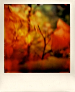 Autumn Colors, Polaroid, October 2012; © Sally W. Donatello and Lens and Pens by Sally, 2013