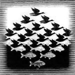 """Sky and Water,"" M.C. Escher, 1938, Google Images"