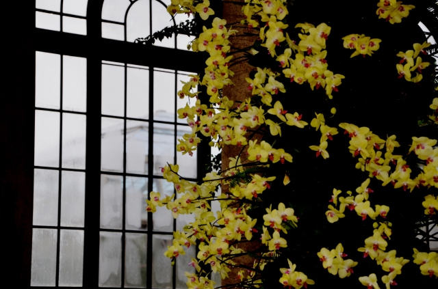 4. Thirteen-Foot-Tall Orchid Arch, Entrance to Exhibition Hall, Longwood Gardens, Nikon DSLR, February 2013; © Sally W. Donatello and Lens and Pens by Sally, 2013