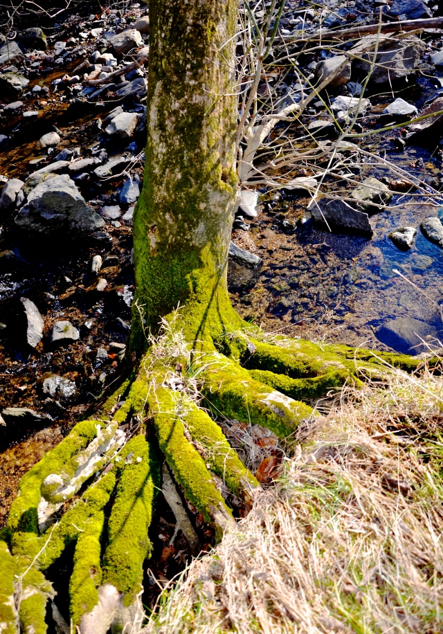1. Moss on Tree Trunk, Nikon DSLR, January 2013; © Sally W. Donatello and Lens and Pens by Sally, 2013