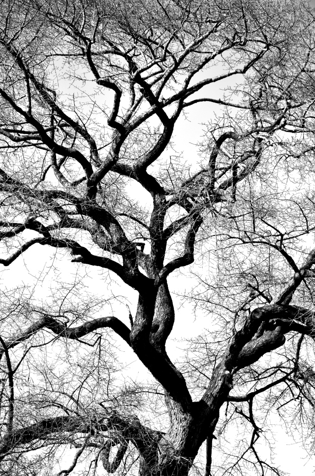 1. The Essence of the Tree, Nikon DSLR, March 2013; © Sally W. Donatello and Lens and Pens by Sally, 2013