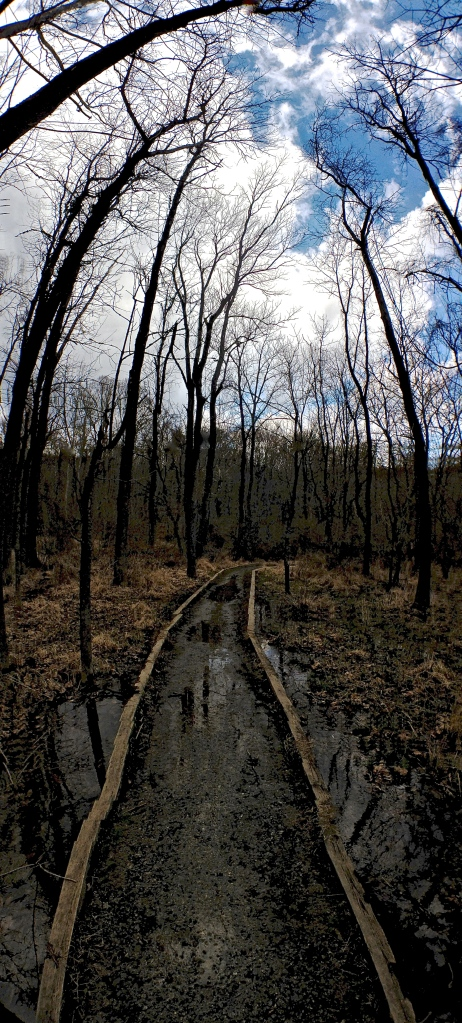 2. Afternoon at White Clay Creek, iPhone 4s, March 2013; © Sally W. Donatello and Lens and Pens by Sally, 2013