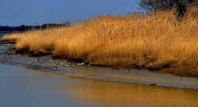 Golden Shoreline, Delaware City, Nikon DSLR, March 2013; © Sally W. Donatello and Lens and Pens by Sally, 2013