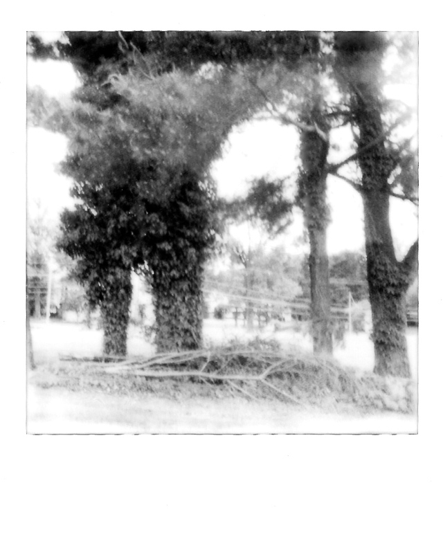 1. Trees, Polaroid, May 2013; © Sally W. Donatello and Lens and Pens by Sally, 2013