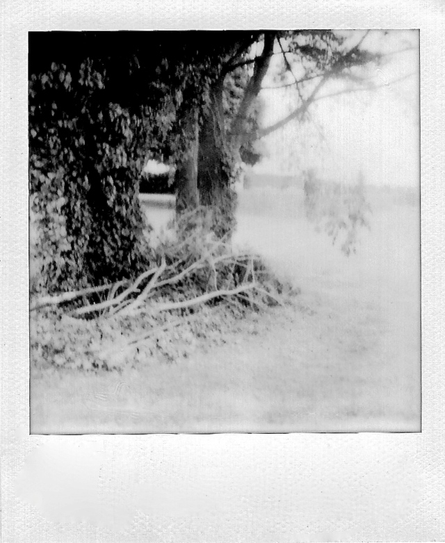 2. Trees, Polaroid, May 2013; © Sally W. Donatello and Lens and Pens by Sally, 2013