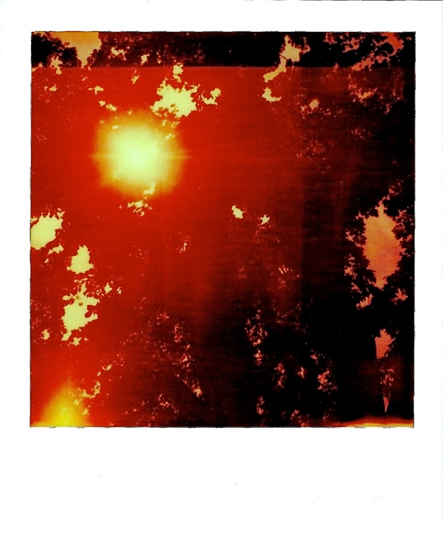 3. Afternoon Sunburst, Polaroid, June 2013; © Sally W. Donatello and Lens and Pens by Sally, 2013