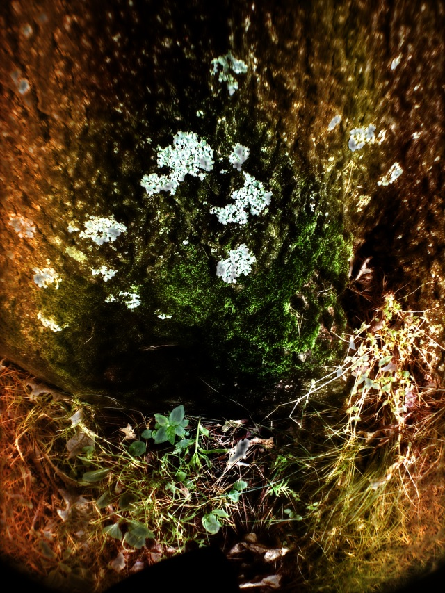 3. Lichens, iPhone 4s, June 2013; © Sally W. Donatello and Lens and Pens by Sally, 2013