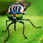 Macro Photography with iPhone, Google images