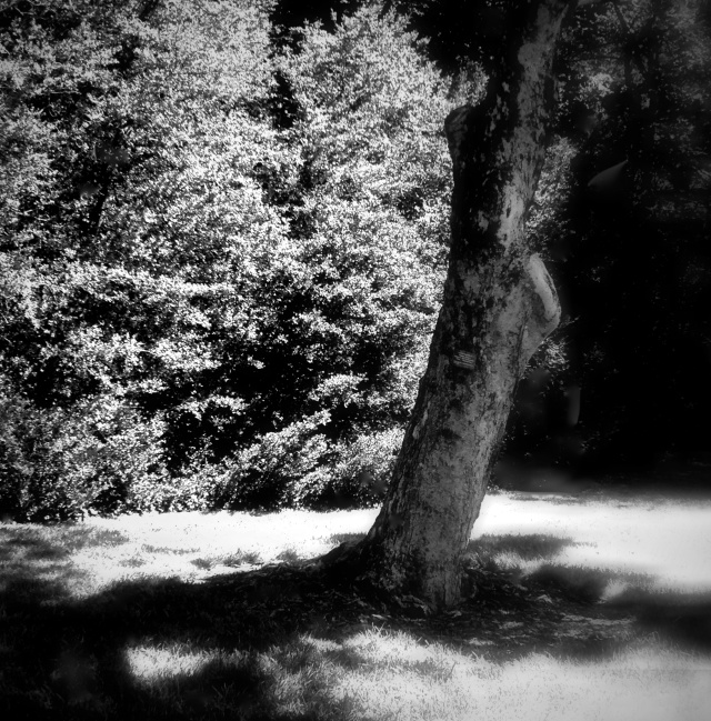 1. Shadows and Tree, Longwood Gardens, iPhone 4s, July 2013; © Sally W. Donatello and Lens and Pens by Sally, 2013