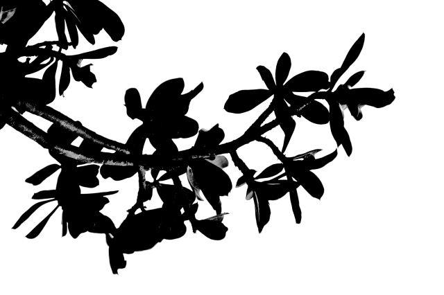 3. Backlit Leaves, Nikon DSLR, Longwood Gardens, July 2013; © Sally W. Donatello and Lens and Pens by Sally, 2013