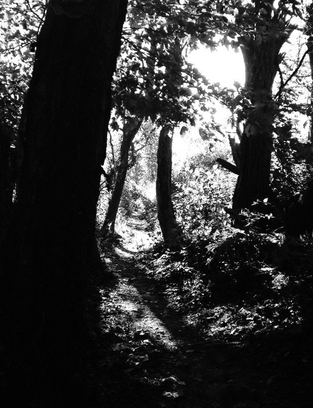 1. Sunlight through the Trees, iPhone 4s, October 2013; © Sally W. Donatello and Lens and Pens by Sally, 2013