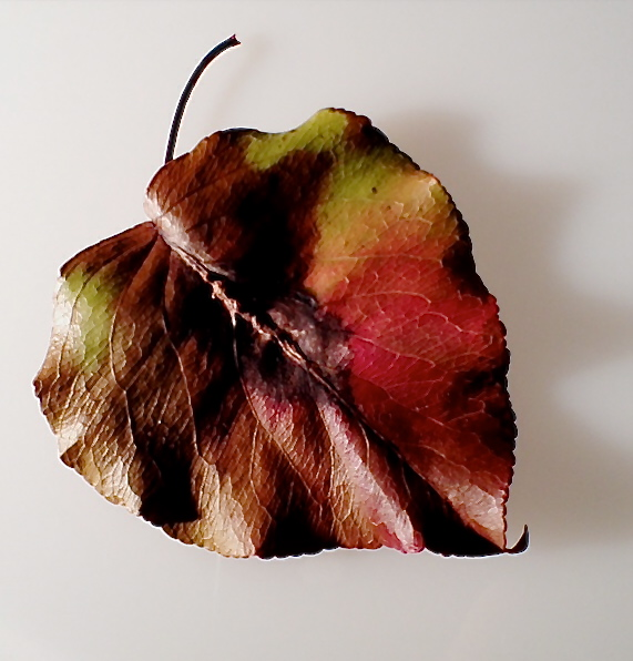 4. Leaf of Bradford Pear Tree, iPhone 4s, November 2013; © Sally W. Donatello and Lens and Pens by Sally, 2013
