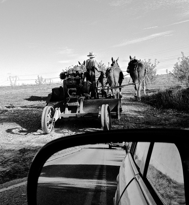 Four Work Horses and an Amish Farmer (conversion to Black and White), iPhone 4s, November 2013; © Sally W. Donatello and Lens and Pens by Sally, 2013
