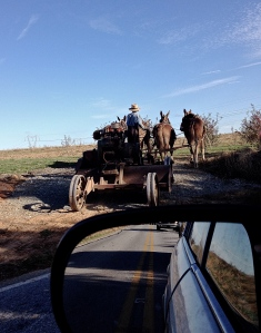 Four Work Horses and an Amish Farmer (original photograph), iPhone 4s, November 2013; © Sally W. Donatello and Lens and Pens by Sally, 2013