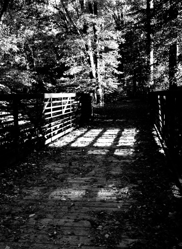 The Trail, White Clay Creek, iPhone 4s, October 2013; © Sally W. Donatello and Lens and Pens by Sally, 2013