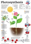Photosynthesis, Google Images